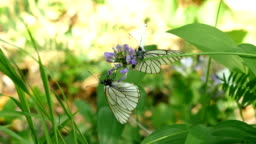 Butterfly on leaf of coconut tree with abstract blur nature backgroundCloseup butterfly On a leaf of a plant slowmotion