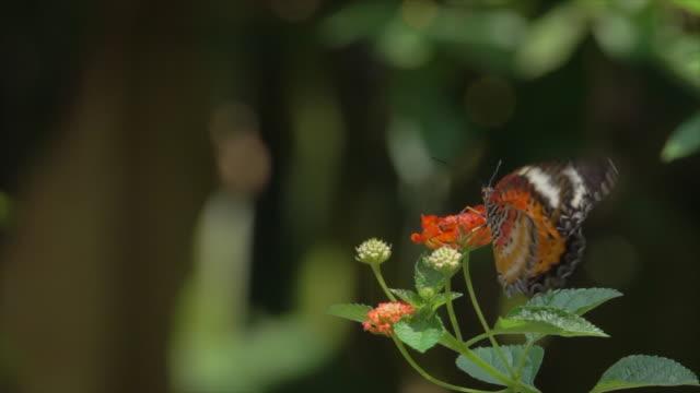 butterfly on orange flower slow motion - monarch butterfly stock videos & royalty-free footage
