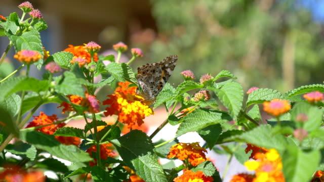 Butterfly on the flower in 4K Slow motion