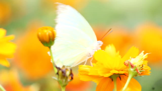 butterfly on yellow flower - butterfly garden stock videos & royalty-free footage