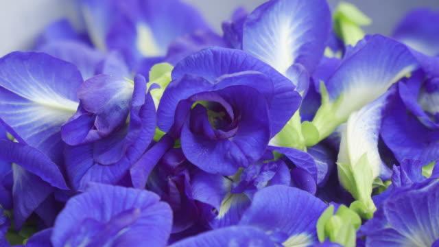 vidéos et rushes de fond de fleurs de pois de papillon - type de paysage naturel