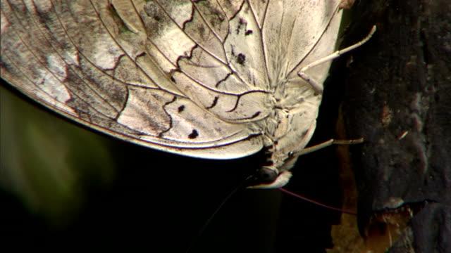 a butterfly perches on a swaying branch. - gliedmaßen körperteile stock-videos und b-roll-filmmaterial