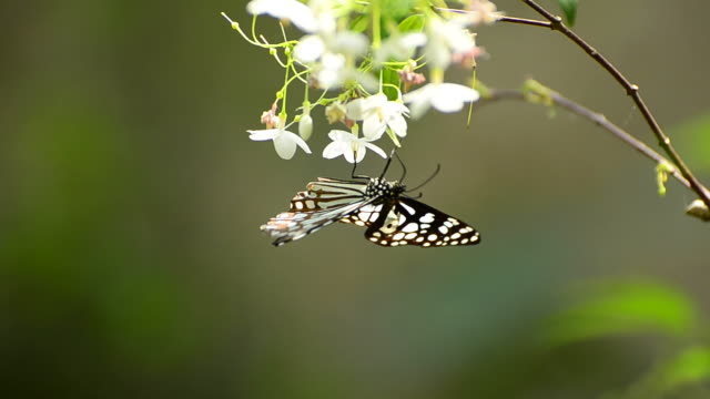 butterfly perching on a leaf - perching stock videos & royalty-free footage