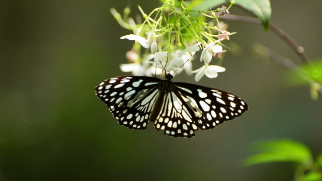butterfly perching on a leaf - animal colour stock videos & royalty-free footage