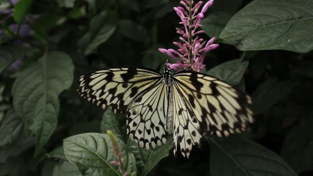 stockvideo's en b-roll-footage met butterfly pit stop - voelspriet