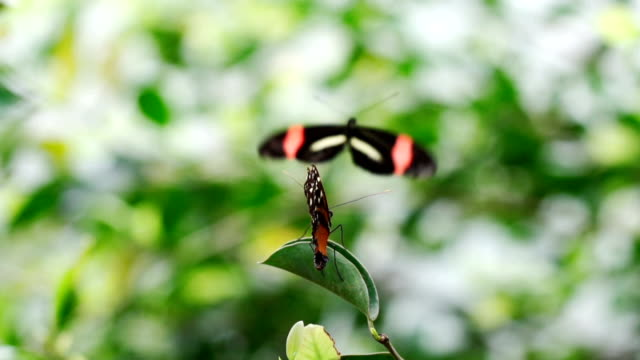 butterfly show love - two animals stock videos and b-roll footage