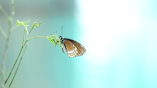butterfly sitting on a stick - butterfly stroke stock videos and b-roll footage
