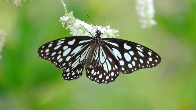 butterfly slow motion - invertebrate stock videos & royalty-free footage