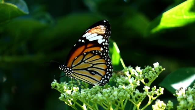Butterfly slowmotion