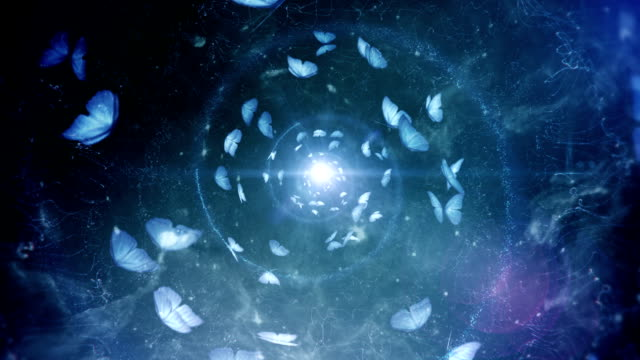 butterfly spiral (blue, centered) - loop - butterfly stock videos & royalty-free footage
