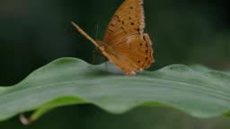 Butterfly take-off in slow-motion