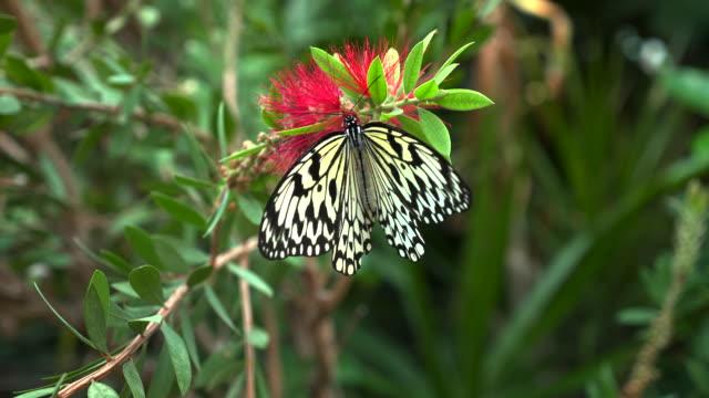 butterfly - 野生生物保護点の映像素材/bロール