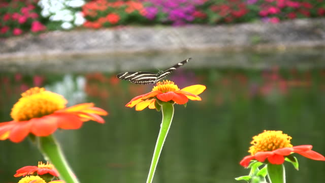 butterfly - butterfly garden stock videos & royalty-free footage