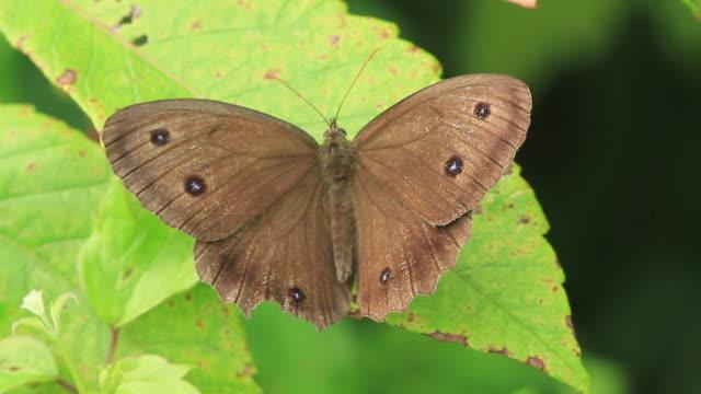 butterfly - gliedmaßen körperteile stock-videos und b-roll-filmmaterial