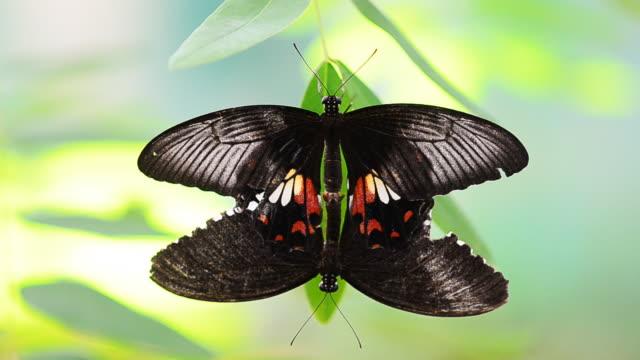 farfalla - ala di animale video stock e b–roll