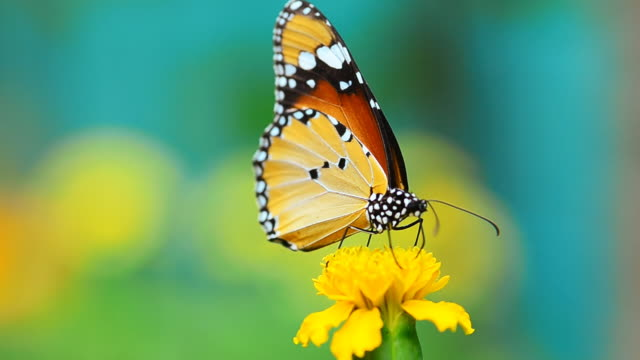 butterfly - yellow stock videos & royalty-free footage
