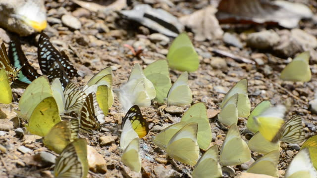 vídeos de stock e filmes b-roll de borboleta - movimento perpétuo