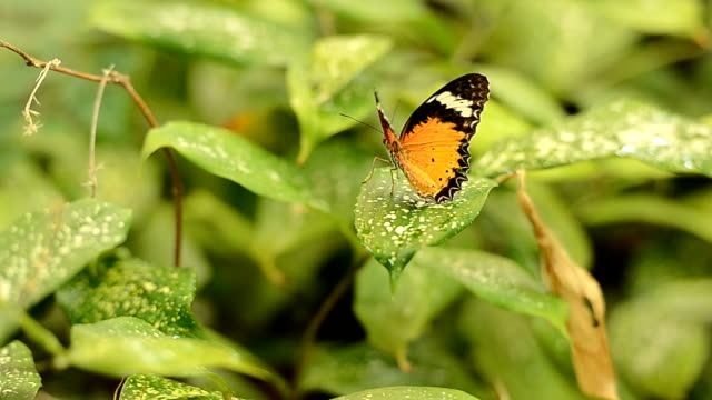 butterfly - animal antenna stock videos & royalty-free footage