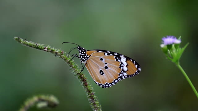 butterfly - animal colour stock videos & royalty-free footage
