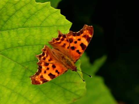 butterfly - named wilderness area stock videos & royalty-free footage