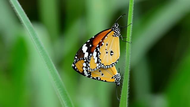 butterfly - digital spegelreflexkamera bildbanksvideor och videomaterial från bakom kulisserna