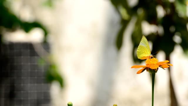 vídeos de stock e filmes b-roll de borboleta - parte do corpo animal