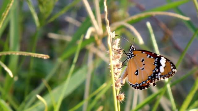 vidéos et rushes de papillon - partie du corps d'un animal