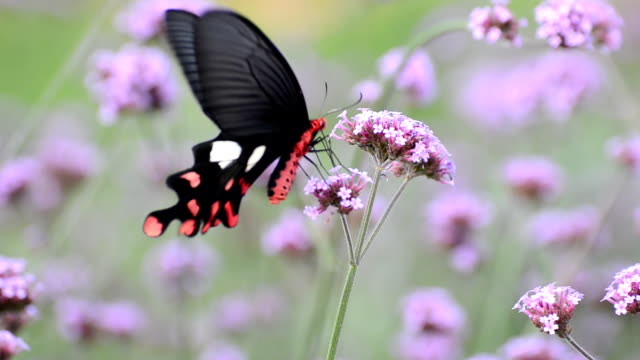 butterfly - animal markings stock videos & royalty-free footage