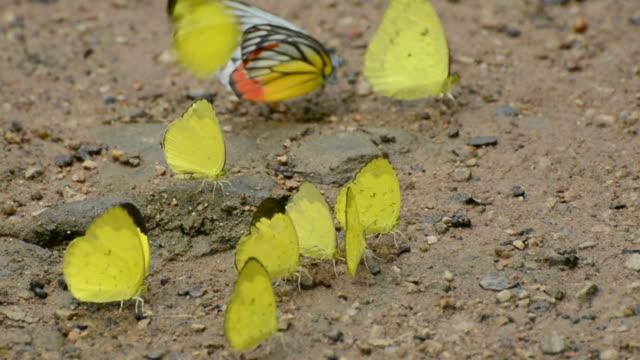 バタフライ - 虫刺され点の映像素材/bロール
