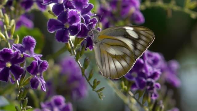 vídeos de stock e filmes b-roll de borboleta - rx