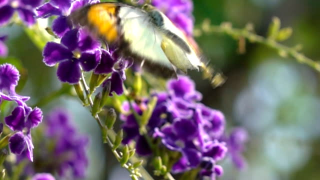 butterfly - rx stock videos & royalty-free footage