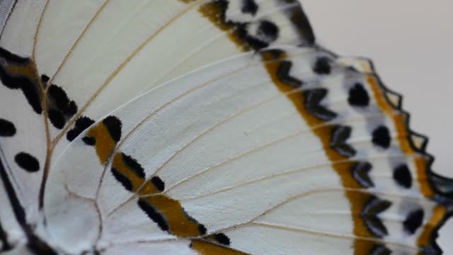 stockvideo's en b-roll-footage met vlinder - dierenvleugel