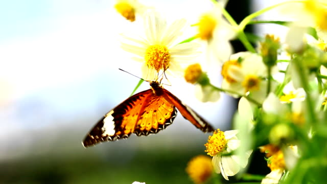 butterfly - springtime stock videos and b-roll footage