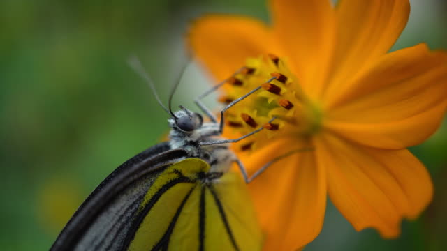butterfly - symbiotic relationship stock videos & royalty-free footage