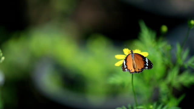 butterfly with flowers - butterfly garden stock videos & royalty-free footage