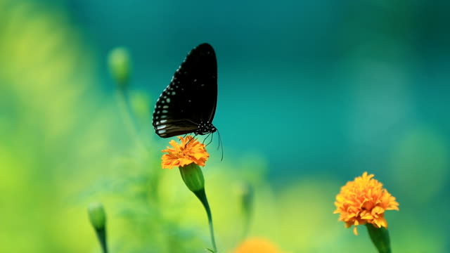 butterfly with flowers. - butterfly garden stock videos & royalty-free footage