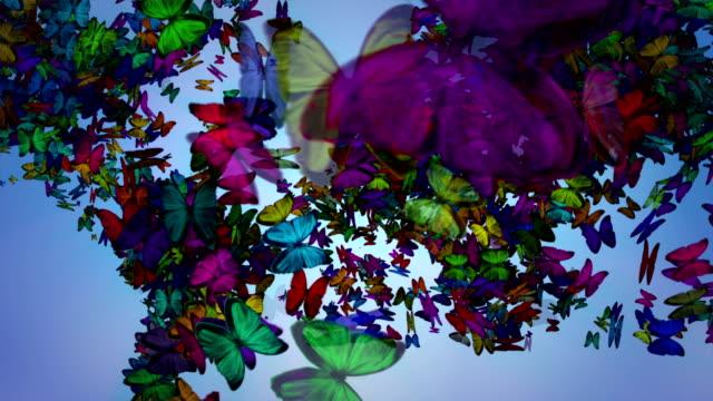 vídeos de stock e filmes b-roll de borboleta mapa do mundo - globo terrestre de escritório