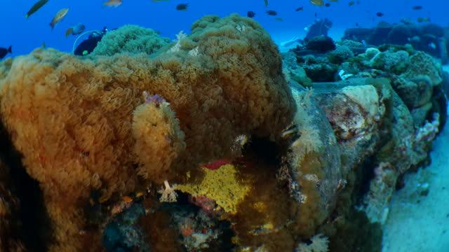 butterflyfish and anthias fish swimming at undersea coral reef, taiwan - anthias fish stock videos & royalty-free footage