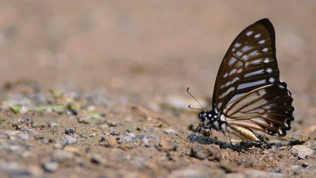 butterflys - 虫刺され点の映像素材/bロール
