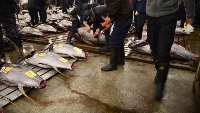 Buyers inspect tuna prior to the first auction of the year at Tsukiji Market in Tokyo Japan on Thursday Jan 5 Buyers gather for the first auction of...