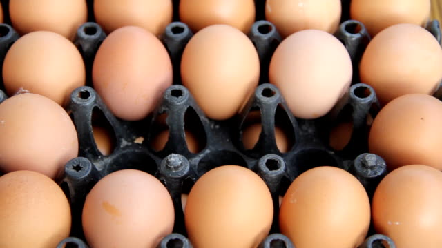 Buying eggs.