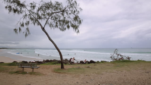 Byron Bay Main beach with a tree and surfers in the sea