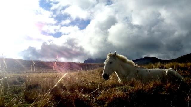 caballo blanco descansando en el pichincha ecuador 1