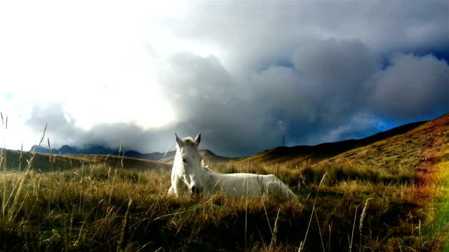 caballo blanco descansando en el pichincha ecuador