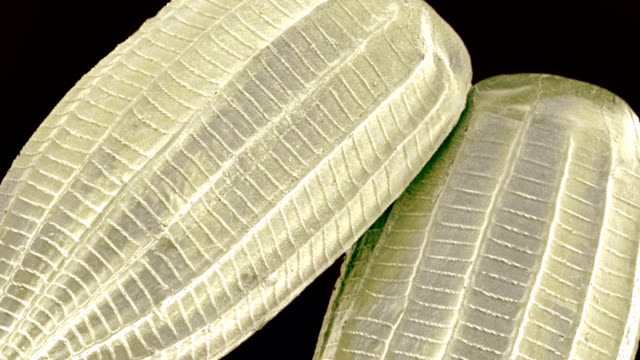 cabbage white butterfly eggs, sem - cabbage stock videos and b-roll footage
