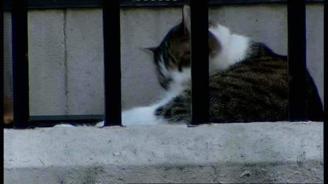 cabinet arrivals at number 10 downing street england london downing street ext downing street cat 'larry' asleep behind railings / cat next to no10... - owen paterson stock videos and b-roll footage