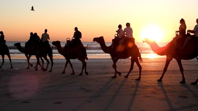cable beach, broome, västra australien. - western australia bildbanksvideor och videomaterial från bakom kulisserna