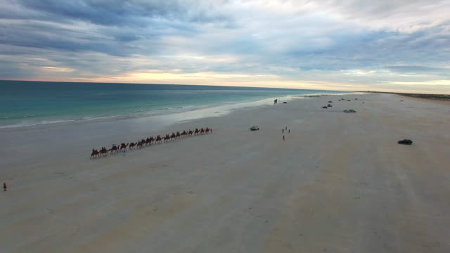 cable beach, western australia - camel train stock videos & royalty-free footage