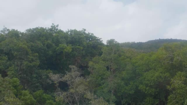 cable car ride to arvi park with view of green hills, trees and a lot of plants,  some houses away from the city in antioquia / colombia - sustainable tourism stock videos & royalty-free footage