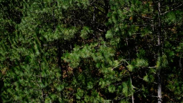 ケーブルカーは松の木を上向き - 松の木点の映像素材/bロール